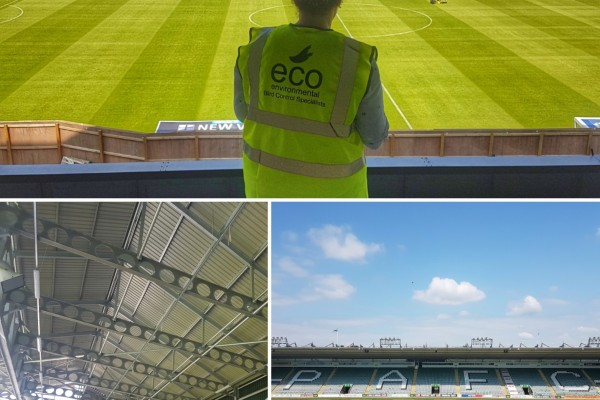 Bird Netting / Plymouth Argyle