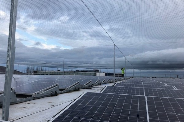 Solar Panel with Gull Netting Clean