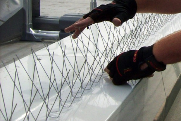 About Eco Environmental - Bird Control Specialists: Bird Spikes Installation