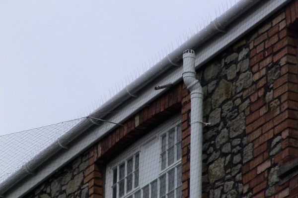Bird Spikes Can Be Used As Part of A Greater Bird Deterrent Solution, for example with Anti Bird Netting