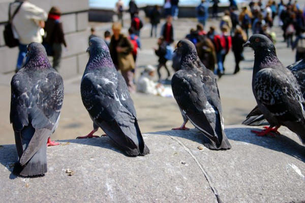 Pigeon Deterrents from Eco Environmental