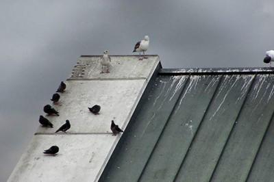 Electric Bird Deterrent Avishock System Bird Scarers