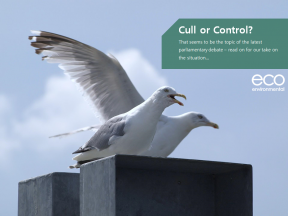 Eco Environmental Services Offer Non-lethal & Humane Gull Deterrent Options.