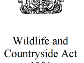 General Licences - Wildlife and Countryside Act 1981