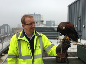 Falconry keeps Colmore Row Birmingham building free from birds.