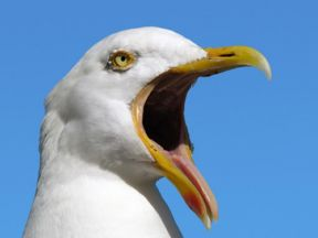 Beat Seagulls With Harmless Bird Control Solutions