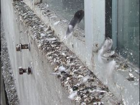 Pigeon Fouling slip claim exceeds £27,000 at Paddington Station