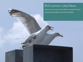 Bird Licences: Latest News